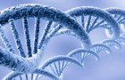 Растения накладывают вето на плохие гены