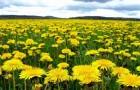Растения спасающие урожай