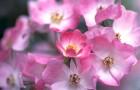Розовый и серый