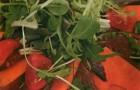 Салат с гусиной грудкой и дыней под имбирным соусом