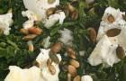Салат с козьим сыром и щавелем