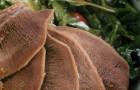 Салат с телячьим языком и соусом васаби