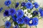 Синий и серебристый