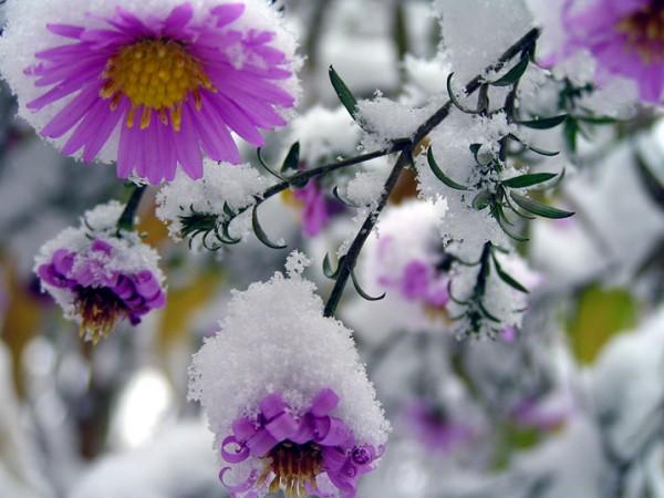 Снег - как одеяло для сада