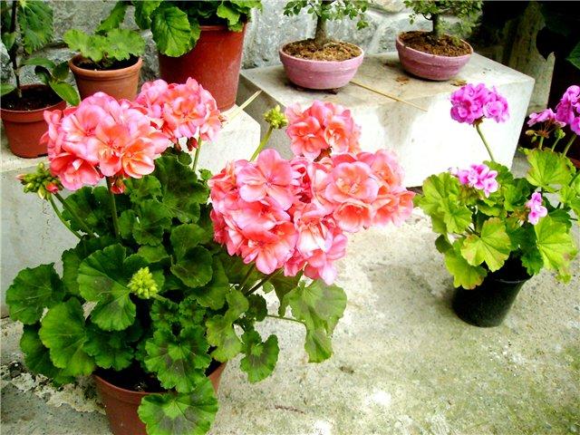 Советы по выращиванию комнатных растений