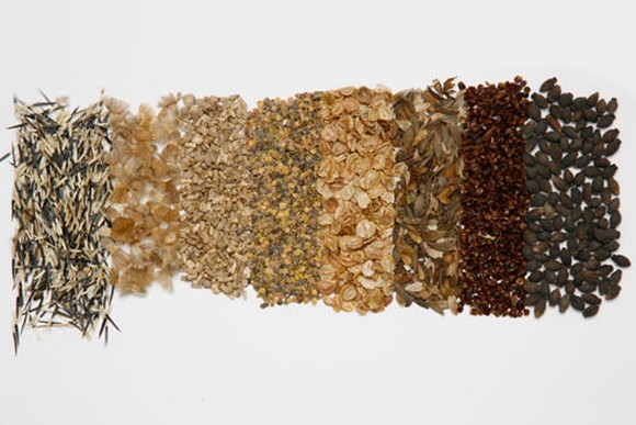 Советы при выборе семян