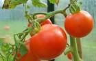 Цветовая гамма помидор