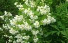 Тематические растения