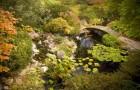 Водный сад