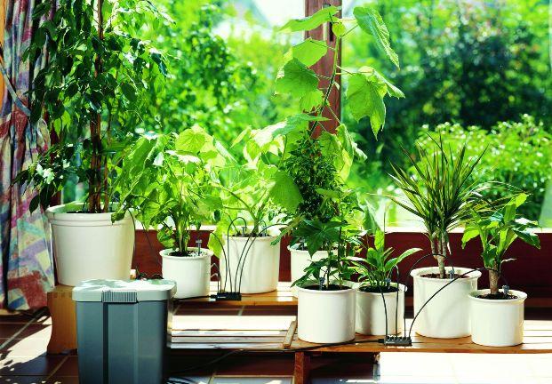 Вредители комнатных растений