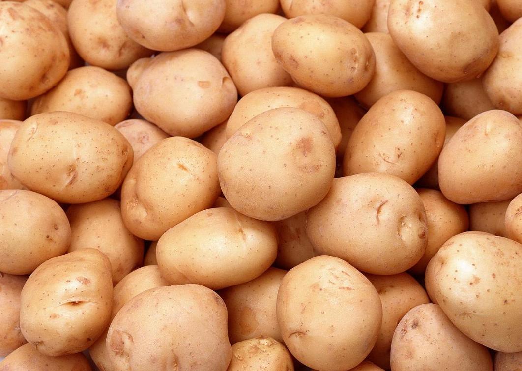 Выбор и посадка картофеля