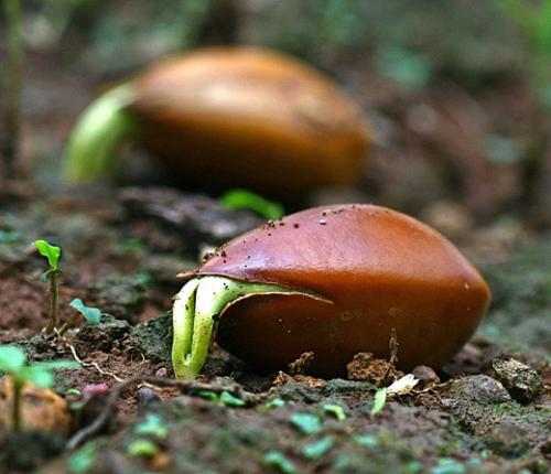 Выращивание растений для последующего использования семян