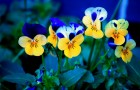 Желто-зеленый и синий