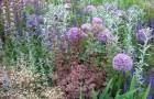 Зачем выращивать разные травы?