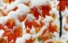 Зима в альпинарии