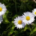 cvety1416