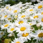flower.s-68