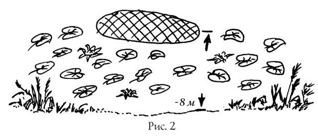 Когда надо ловить линя и как определять место ловли