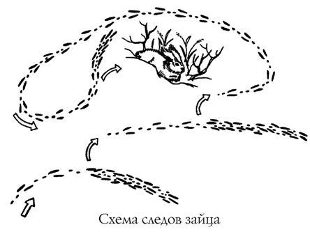Охота троплением на зайца (по русачьим следам)