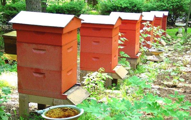 Как мне сделать улей для пчел