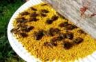 Белковые корма для пчел