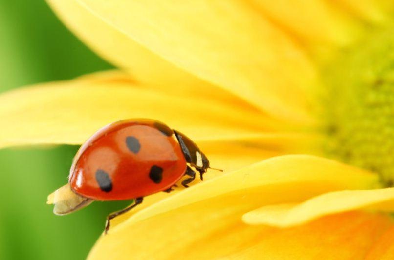 Биологические средства борьбы с вредителями цветов