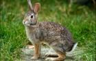 Другие виды охоты на зайцев