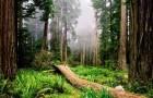 Два новых способа сохранить природное разнообразие