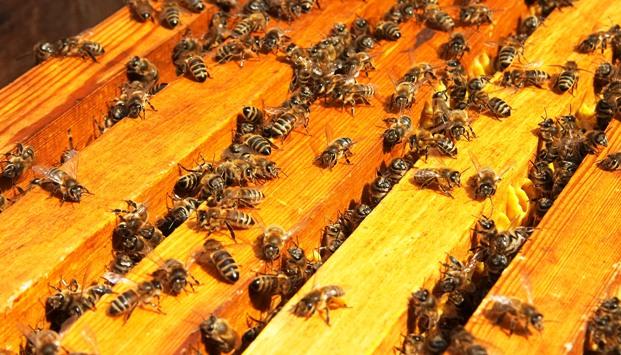 Главная весенняя ревизия пчелиной семьи