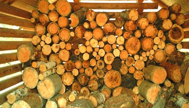 Характеристика пород деревьев