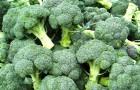 Иммунную систему можно укрепить капустой и брокколи