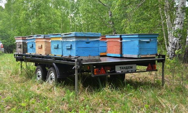 Как доставить пчел на пасеку