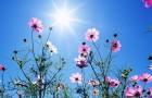 Каждому цветку, своя сторона света