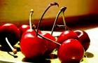 Настойка на вишневых плодоножках