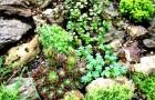 Новый подход к управляемой эволюции растений