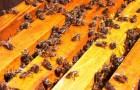 Осенний период у пчел