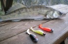 Оснащение рыболова для ловли судака