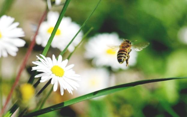 Особенности поведения пчел