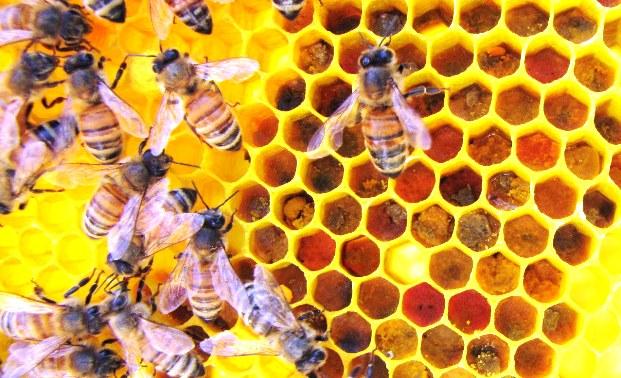 Пчелиное гнездо