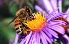 Почему социальные пчёлы не повторяют ошибок