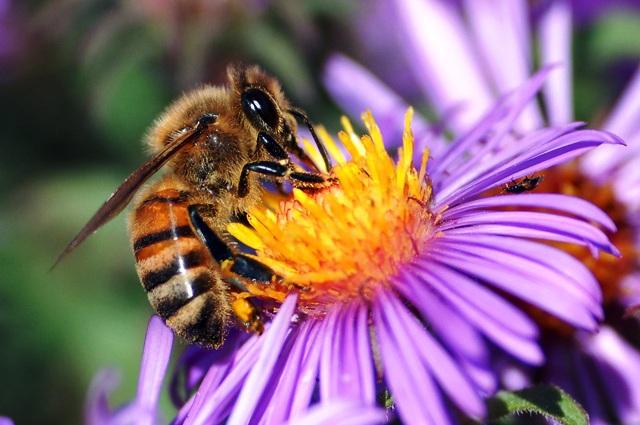 Почему общественные пчелы не повторяют ошибок