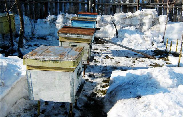 Подготовительные работы перед выставкой пчел