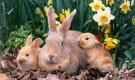 Преимущества и экономическая выгода кролиководства