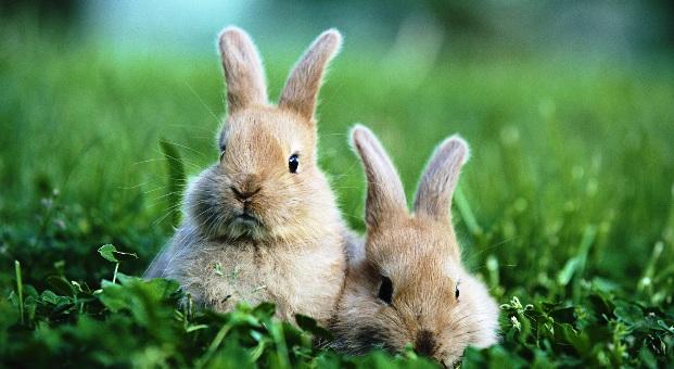 Профилактика, лечение заболеваний кроликов