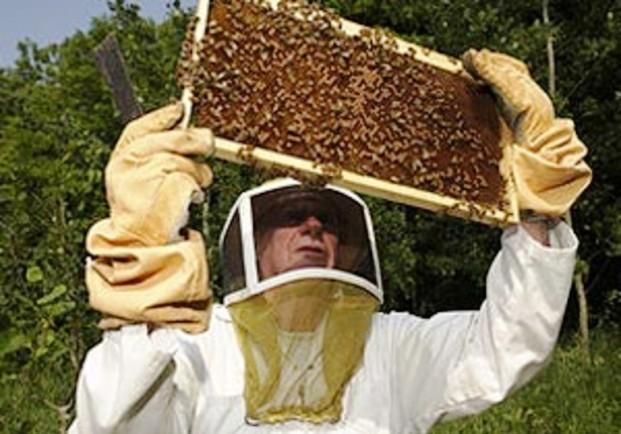 Проведение осмотров пчелиных семей