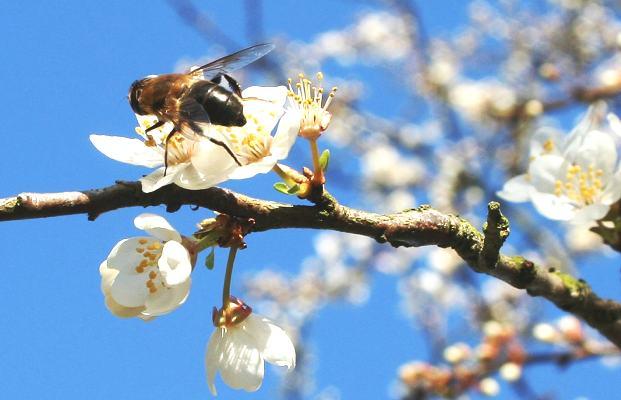 Ранневесенний период у пчел