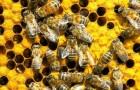 Расширение пчелиных гнезд