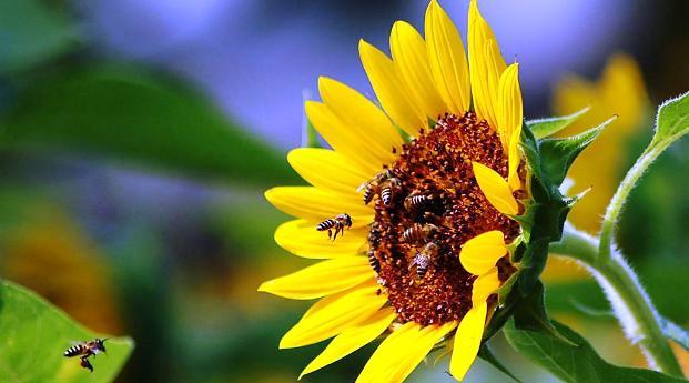 Сокращение числа  насекомых угрожает урожайности во всем мире