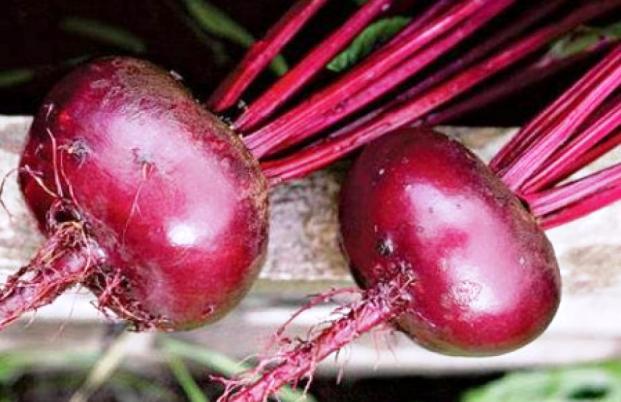 Свёкла: корнеплод долголетия
