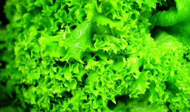Теперь салат сможет расти даже в жару
